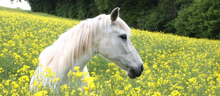 Ein Pferd für Eure Hochzeit?